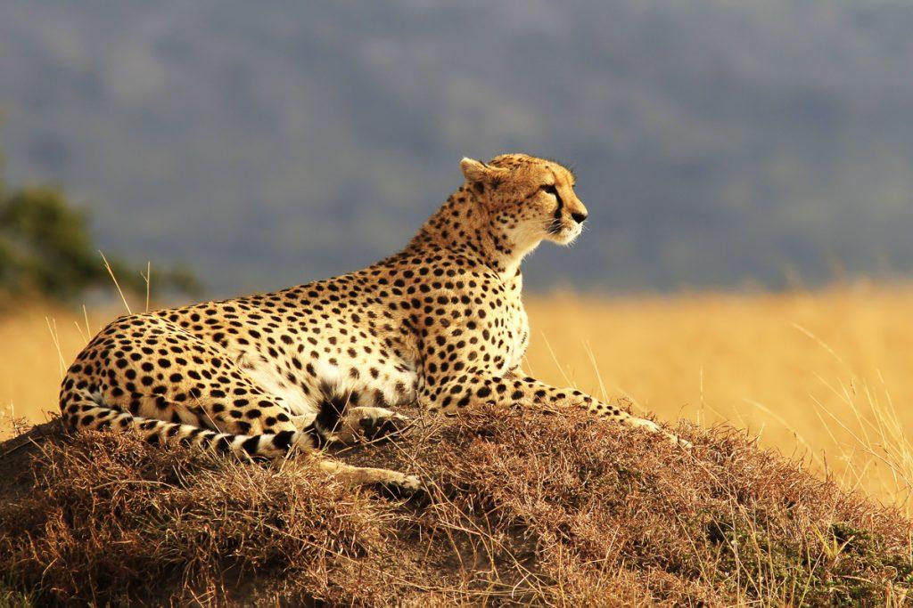 6 sites et expériences incontournables au Kenya