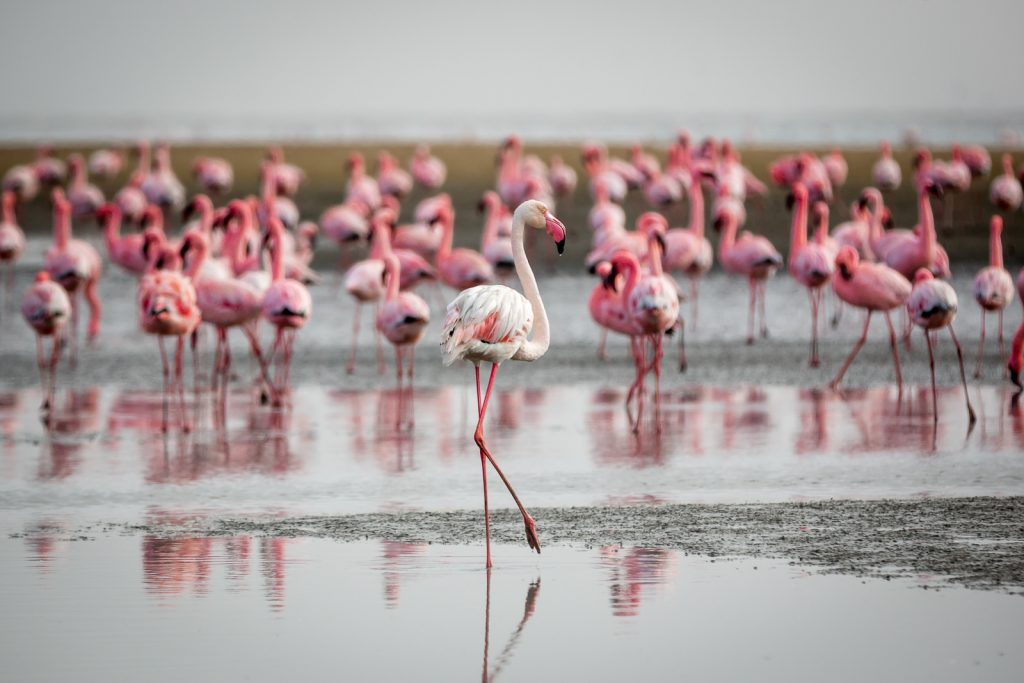 incontournables Namibie