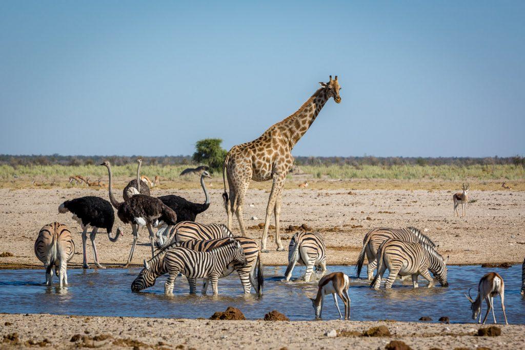 que faire en Namibie