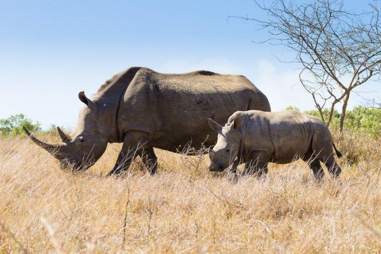 Préparer son voyage en Afrique du Sud