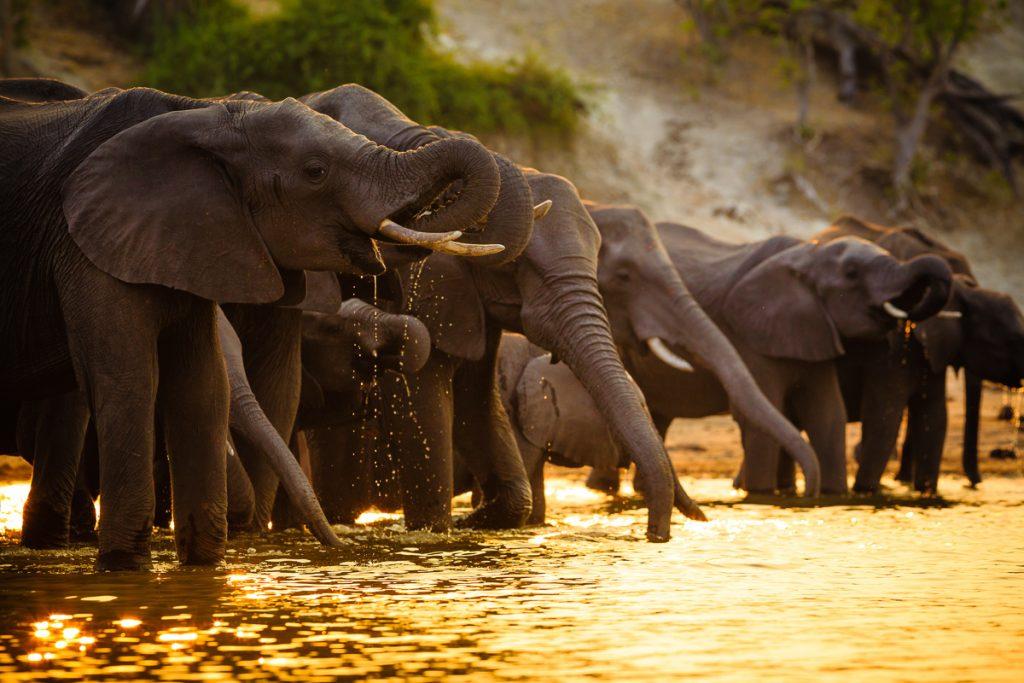 que faire au botswana
