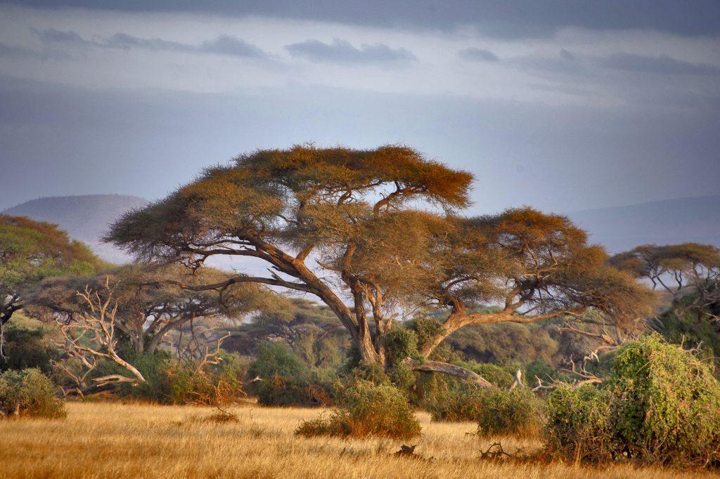 incontournables Tanzanie