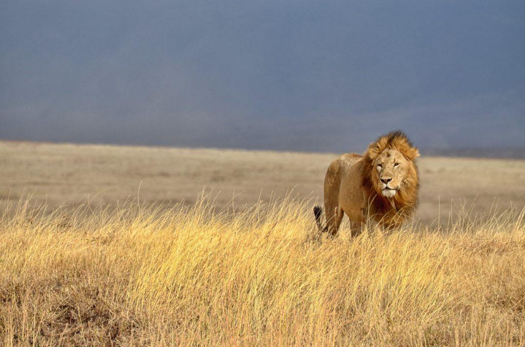 7 sites et activités incontournables en Tanzanie