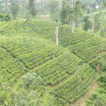 que faire au Sri Lanka