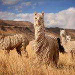 incontournables Pérou